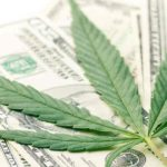The Marijuana Stock Market Is Beginning to Mature as Time Goes On